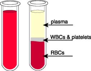 Image result for blood plasma